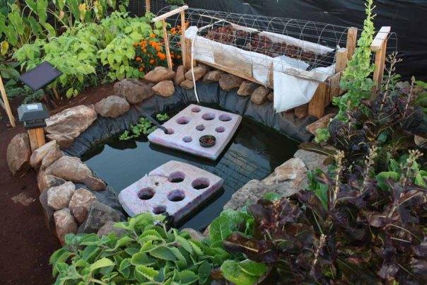 fishpond aquaculture